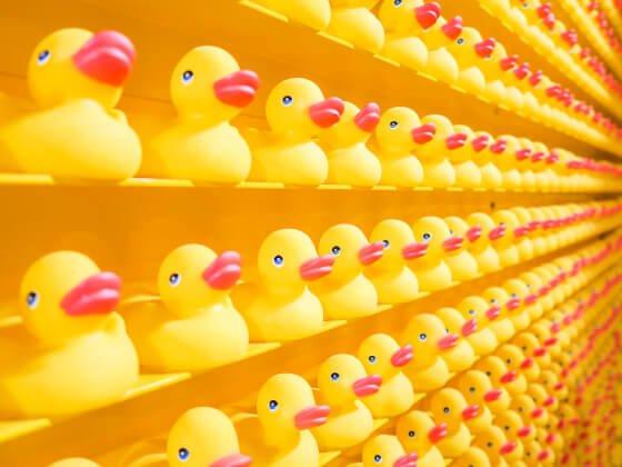 perfektné žlté kačičky